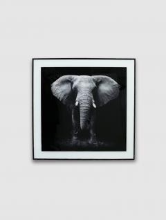 Cuadro Elefante 50x50