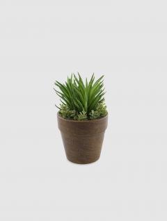 Maceta Suculenta Beauty 13cm