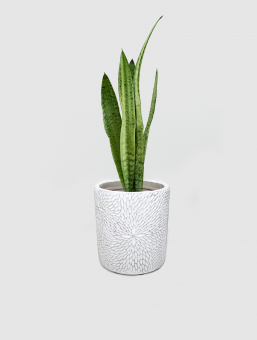 Maceta Cement Flower Gr