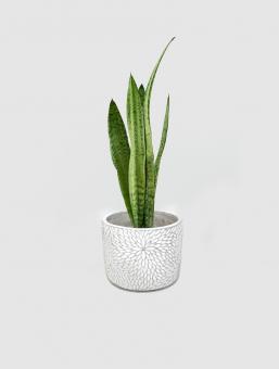 Maceta Cement Flower Ch
